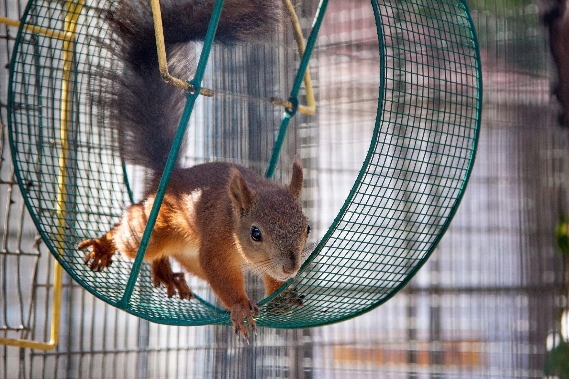Pénz és mókuskerék